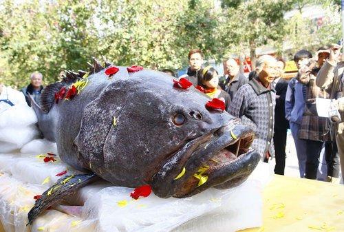 重618斤石斑鱼现身珠海 - 雨·情 - 雨情