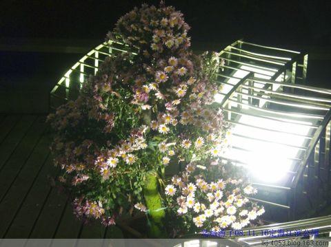 (原创)乱弹琴--菊花 - 从来处来 - 岛城游子的博客