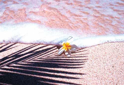 世界上最性感的粉红海滩