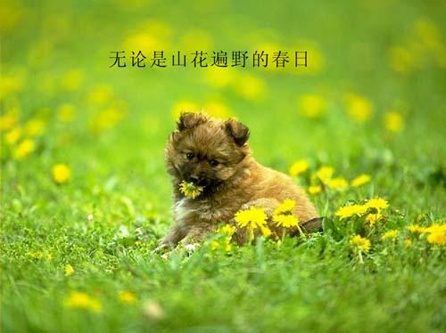 小狗狗的友情故事(组图) - 皓月清风721012 - 皓月清风