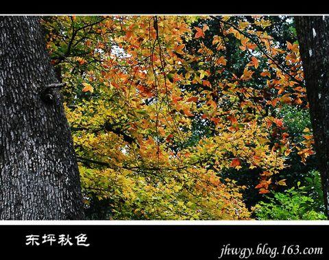 东坪看秋(原创) - 木头格子 - 下营街三十八号