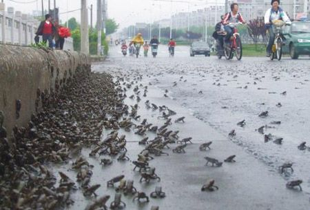 7.8级大地震的前后最惊人照片(组图)四川汶川 - 马洪涛 - 我的博客