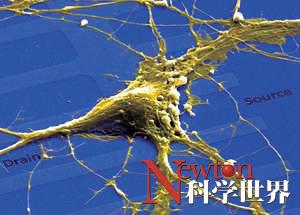 大脑会在储存新信息时覆盖掉旧的信息吗? - kxsj - Newton-科学世界