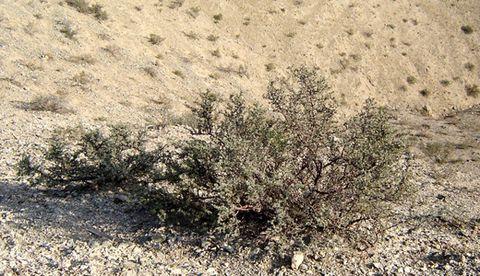 我们知道了四合木是国家二级保护植物