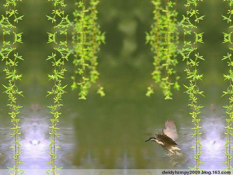 雨中的印象  【 现代诗歌 】 - 晨席 - 晨席的博客
