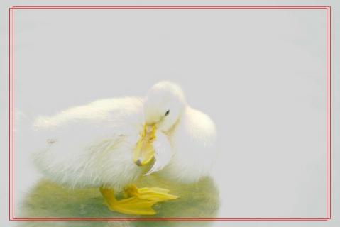 摄鸭 - maqh1950 - 两个老小孩的博客