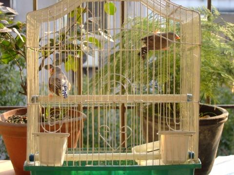 我家有对小小鸟 - 放牧心灵 - 放牧心灵的博客