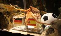 章鱼保罗出生在那里 完全资料 联系方式 身份 照片 就是条鱼 章鱼保罗,它生于英国,在德国长大, - 太能团队 - 《汽车美容店金牌店长》