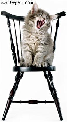 世界最可爱搞笑的猫猫图片集(搞笑图文) - 網際飛星 - 璀璨星空旖旎花園gegei.com