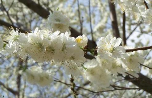 尴尬的春游 - 杨澜 - 杨澜 的博客