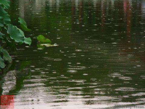 六月荷花摄影诗歌(2)《采桑子.荷塘听雨 - 六月荷花 -  六 月 荷 塘