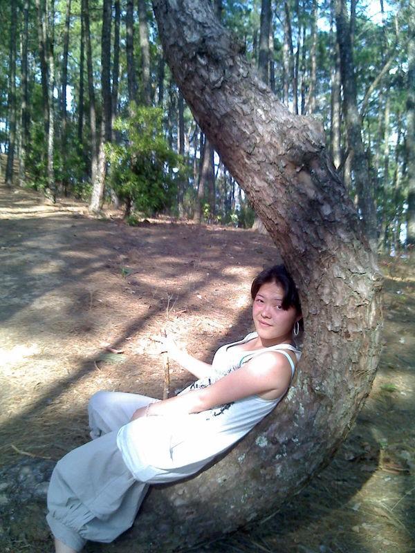 奇怪的树 - 爱家的人 - ljf6826 的博客