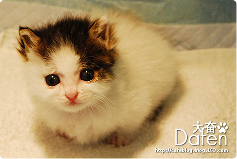 臭臭猫日记17-今天是我的生日,不过还是发张大奋的GIF吧 - cafe - 许宁的博客 cafe blog