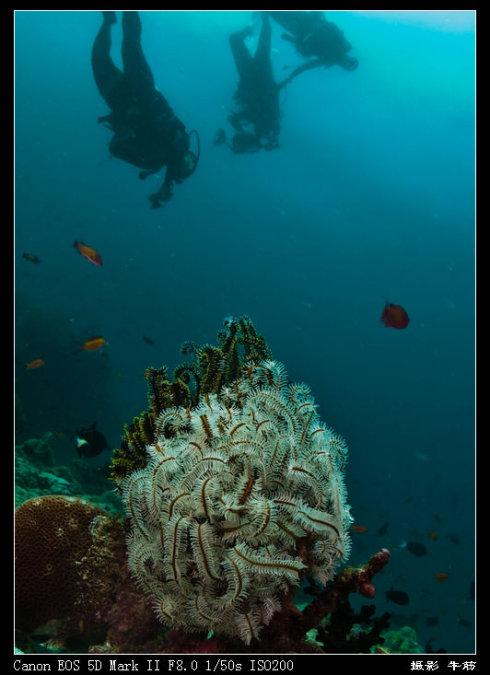 马尔代夫之旅——海底刮起了狂风暴雪 - 牛筋 - 牛筋的博客