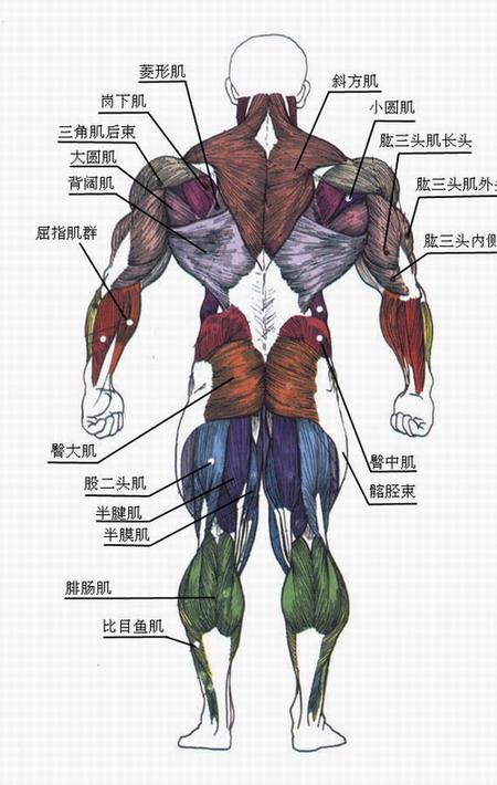 肌肉哑铃健身全攻略 - 水丽芳 - 水丽芳的博客