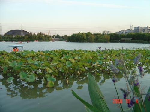 十六的月亮升起闵行体育公园 - 杨红旭的地产面包圈 - 杨红旭