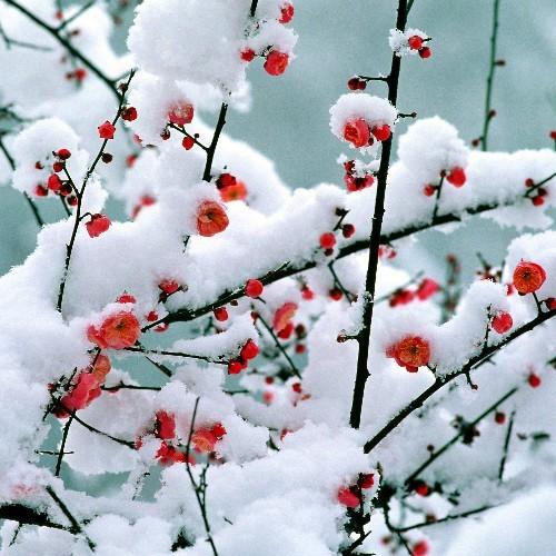 咏雪 - wfan5109 - wfan5109的博客