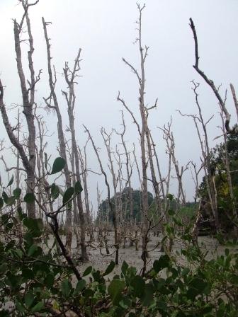 热带丛林的际遇 - 老虎闻玫瑰 - 老虎闻玫瑰的博客