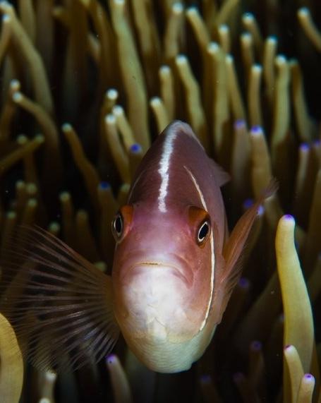探索:海洋深处的鈥溞⊙置氢