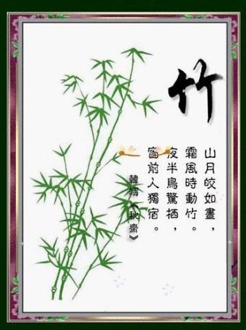 梅、兰、竹、菊、枫、松 - qujiqiang111 - 好漂亮的流星