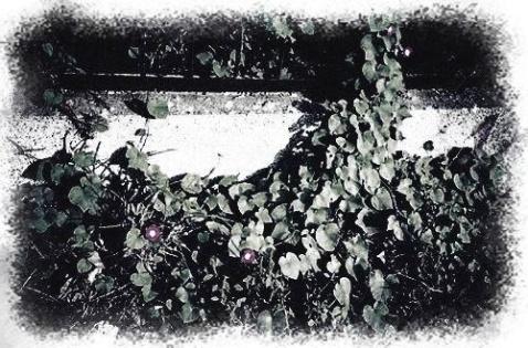 神秘园之歌 - 荫子 - 倾听夜色