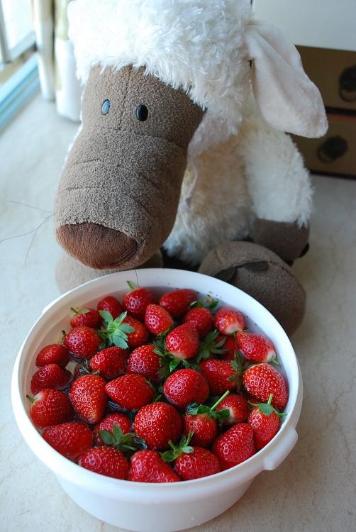 草莓123 - mojostudio -           MOJOSTUDIO