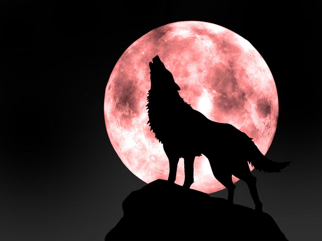 狼图腾语录 - 千百度 - 千百度的博客
