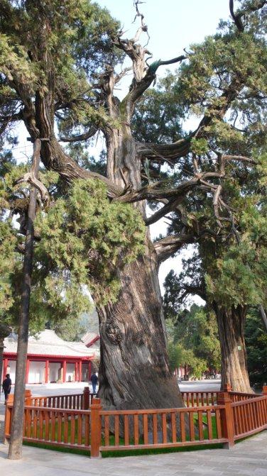 十大名树 - 红芙蓉 - 红芙蓉的博客