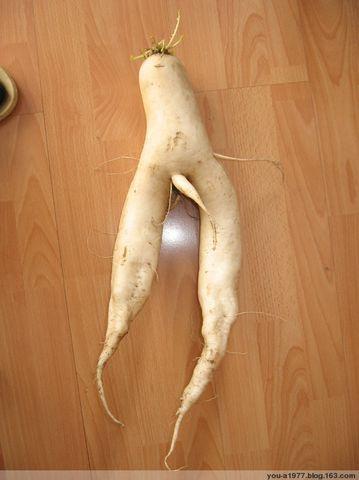 史上最牛的萝卜 - 无公害老玉米 - 无公害老玉米的博客