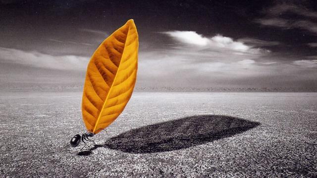 诗歌:蚂  蚁(二首) - 和静 - 心结和静
