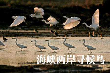 海峡两岸寻侯鸟(内地篇)-侯鸟迁徙(一) - 华夏地理 - 华夏地理的博客