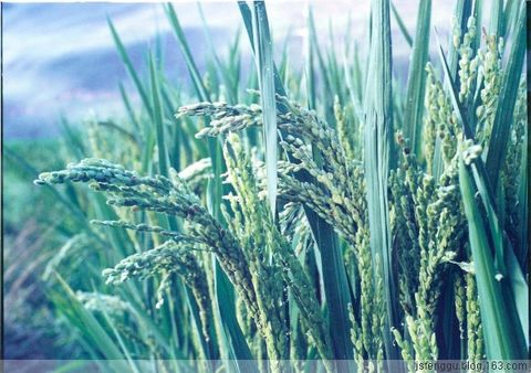 绿色农业 一个双赢的生态博弈  - 江苏省丰谷种业有限公司 - 江苏省丰谷种业有限公司