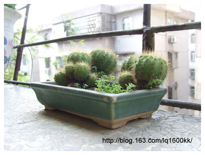 2008中秋节假期的一天 - lq -