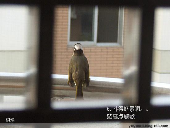 小鸟照镜子打架 - yiliyumili - 一粒玉米粒