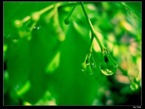 和雨滴对话[原创诗文] - 夫一 - 夫一1213@的博客