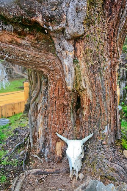 西藏神奇的阴阳树:珞巴人的神树 - 阿文 - tibet52的博客