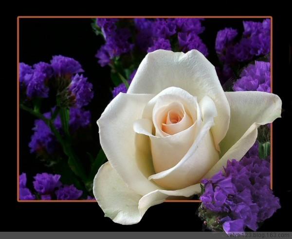 采摘玫瑰送朋友【插图】 - 【芳仙姑】 - 健康是最佳礼物  知足是最大财富