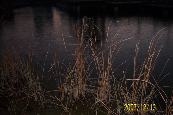 初冻池边草 - 雨溪翁 - 雨溪翁的博客