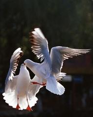 (原创)鸟儿的浪漫事(组图) - 躬耕@网田 - 躬耕@网田