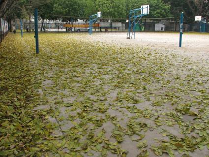 华师落叶篇 - 透明雨 - 透明雨的博客