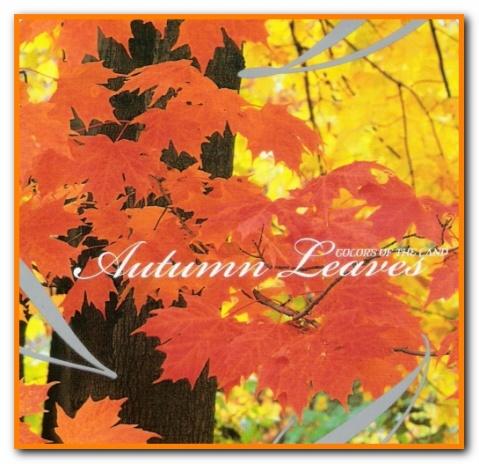 【专辑】Dan Siegel 丹·西格尔 - Autumn Leaves 秋叶琴绿 320K/MP3 - 淡泊 - 淡泊