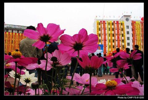 校园里的花朵 - 空山听雨 - 空山听雨:摄影是一种力量
