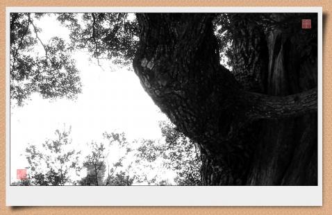 尘境8226;禅境 - 风情一剑 - 風情一劍的靜思世界