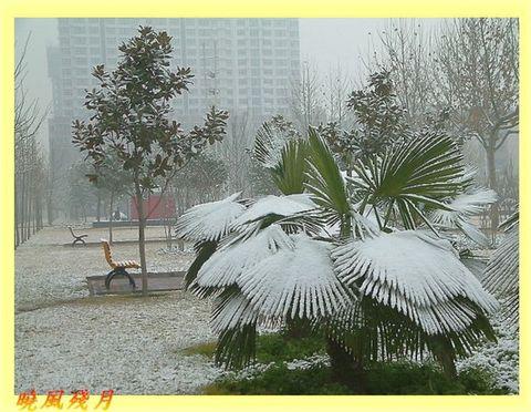 鄭州雪景 - 曉風殘月 - 曉風殘月