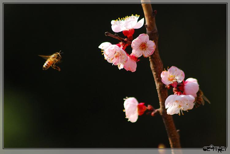 三月里的梅花 (08版) - 逍遥老苏 - 握紧老苏手,逍遥天下走