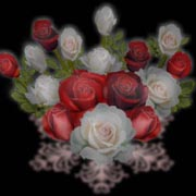 黑色背景插画.玫瑰 - 香儿 - 香儿