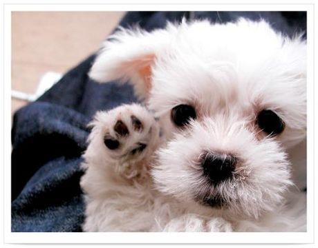 (原创) 请挺起你那狗的脊梁 - 漫天大雪 - 漫天大雪的博客