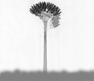 远方的树 - 老秋 - 老鱼吹浪的博客