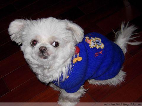 我是一只还算幸运的犬[原创小小说] - shui mo hua - shuimohua欢迎你,来访的朋友!
