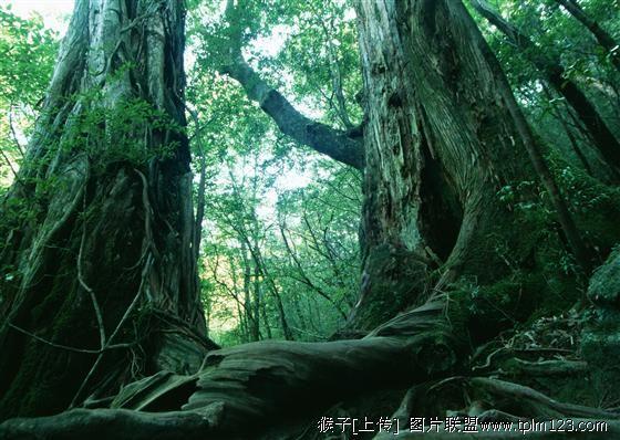 树——写给大地和人类 原创情诗 - denghoufuxing - 等候复兴